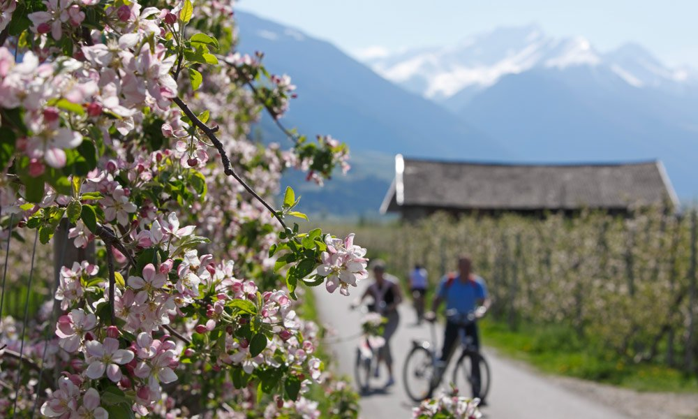 Mountain-bike in primavera in montagna