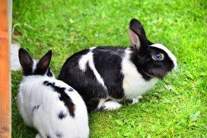 tiere-kaninchen2