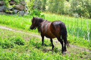 tiere-pony