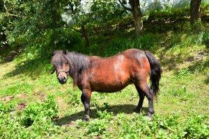 tiere-pony2